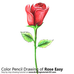 Rose Easy with Color Pencils [Time Lapse] (drawingtutorials101.com) Tags: rose easy flower flowers roses sketch sketches drarw drawing drawings color colors pencil how draw timelapse video speed