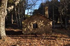 DSC_7713 (karbayal) Tags: karbayal d90 nikon sanabria robledo rihonor españa portugal bosque pinar refugio atardecer