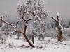 SNOW IN FEBRUARY P2042168 (hans 1960) Tags: winter schnee snow cold kalt morning trees bäume bizzar weis white 2018 nature natur landschaft landscape bedeckt obstbäume streuobstwiese wiese