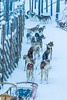 Rovaniemi- Finland, January 1, 2018: Highbred Alaskan Husky In Rovaniemi Husky Sledding Dog Park in Finland in January 1, 2018 (DmitryMorgan) Tags: dog scandinavia alaskan animal arctic arcticcircle bred breed calm cold destinations dogsled editorial energy environment europe finland forest holiday hound husky huskys lapland malamute mammal nature nordic north northern outdoor outdoors pedigree pet puppy purebred race rovaniemi siberian sled sledding sledge snow snowy suomi tranquil travel traveling winter