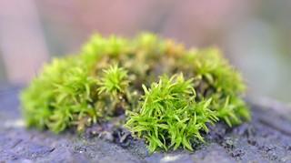 moss on a patio wall