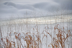 softly through winter (christiaan_25) Tags: grasses grass tallgrass blades seeds stems frilly elegant poetic soft nature brook stream frozen cold winter snow drifts shadows light golden white explore feb162018 145