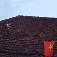 IMGP8932 La gatta sul tetto che scotta (Cat on a Hot Tin Roof) (Claudio e Lucia Images around the world) Tags: cat roof hot hotroof flag redflag vietnam conson condao pentax pentaxk3ii pentax60250