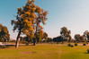 Foliage - II (AM_DB) Tags: nature landscape india gujarat nikond40 travel