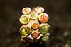 #MacroMondays#LessThanAnInch#OneOfMyFavoriteRing (Vinciane Art) Tags: macromondays lessthananinch ring colors
