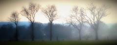 Club des cinq (fred'eau) Tags: campagne extérieur brouillard nature