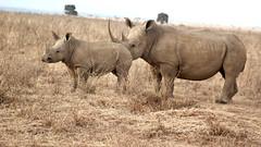 x2 (Nagarjun) Tags: safaritrektourscoke safari nairobinationalpark kenya africa wildlife mosesnjomo brown dawn morning sunrise sunshine