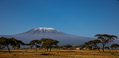 Kilimanjaro (Thomas Retterath) Tags: safari natur nature africa afrika kenya thomasretterath adventure wildlife abenteuer amboseli kilimanjaro akazie tree baum acacia berg hill himmel sky horizont horizon sonnenaufgang sunrise