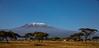 Kilimanjaro (Thomas Retterath) Tags: safari natur nature africa afrika kenya thomasretterath adventure wildlife abenteuer amboseli kilimanjaro akazie tree baum acacia berg hill himmel sky horizont horizon sonnenaufgang sunrise