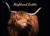 Hairy (FocusPocus Photography) Tags: rind kuh cattle cow hochlandrind highlandcattle ter animal vieh nutztier livestock haarig hairy hörner horns schwarzerhintergrund blackbackground