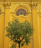Hello Yellow in Nice (salsellen) Tags: tree tre fasade fasad yellow old wall nice