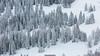 Covered in white (Nicola Pezzoli) Tags: dolomiti dolomites unesco val gardena winter snow alto adige italy bolzano mountain nature december corvara piz boe foresto white covered zoom