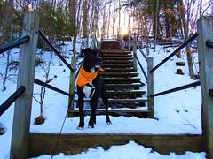 (Amberly Marlene) Tags: dog park kirk beach lake michigan snow winter ice mini glacier caps sand pitbull black lab mutt puppy doggo cute sunny day