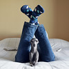 Happiness is a cozy tent ⛺ (@dora_figalga) Tags: happysocks cozy tent socks happyfeet cozytent italiangreyhound iggy greyhound sighthound galgo greydog dog pet specialdog doglover cutedog sweetdog bestfriend cute sweet happydog dora dorafigalga