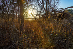 Inks Lake Sunset (abridwellphoto) Tags: travel landscape sunset sun sky tree trees grass brush branches outdoors outside park lake blue yellow gold golden orange nikon