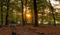 Warm Autumn Light (Aleem Yousaf) Tags: colours autumn light sun burst leaves fall trees nikon d800 east london morning wanstead flats photo walk sunrise serene epping forest landscape outdoor warm 2470mm long exposure londonist londoner londontown londonbylondoners timeoutlondon