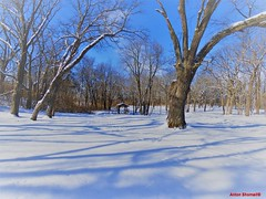 Snow at Kankakee State Park (Anton Shomali - Thank you for over 1 million views) Tags: frosty frost 2018 218 january season ice cold wintertime winter shadows shadow path piketrail trail coveredbridge bridge snow kankakee state park kankakeestatepark tree trees sky bluesky sun sunny deep covered