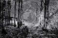 HARSH WINTER. (Viktor Manuel 990.) Tags: forest woods trees winter invierno digitalart artedigital monochrome monocromático querétaroméxicovictor manuel gómez g