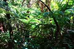 Hawaiian Rainforest Up Close (Ken S Three) Tags: hawaii forest rainforest jungle ferns nature growth plants