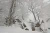 Freezing fog (Hector Prada) Tags: bosque nieve niebla invierno rocas árbol ramas cencellada hielo urbasa forest snow fog mist winter rocks tree branch ice frozen frost mood navarra