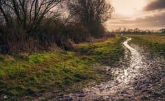 The thaw... (Kerriemeister) Tags: york yorkshire riverside walk nikon muddy path fields riverbank ouse mud puddles landscape bleak