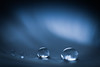 Of a type. (Neal.) Tags: macromondays monochrome water drops feather bokeh scotland blue light dark 7dwf