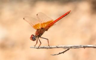 Red & Saffron