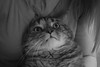(vmRob) Tags: cat cats kitty kitties housecat domestic cute pet pets pentax k10d kmount bnw bw blackandwhite blackwhite