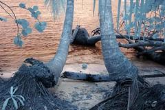 Infrared Cahuita National Park (279) (Beadmanhere) Tags: costa rica cahuita national park infrared