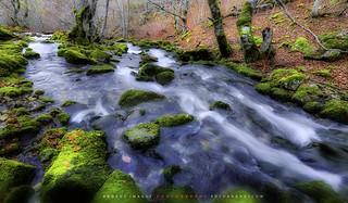 Arroyo en el bosque //Brook in the forest