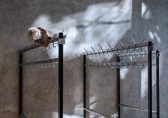 Back in a while (thewhitewolf72) Tags: berlin mütze garderobe akademiederkünste baldzurück schatten beton wand pariserplatz winter
