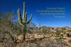 Daily Haiku: Desert (James Milstid) Tags: suguaro haiku haiga poetry dailyhaiku jemhaiku
