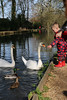 Feed the Birds  tuppence a Bag (Neyol) Tags: swan child water duck river feed test