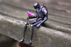 K2SO Finds a Flower (Jezbags) Tags: k2so flower starwars rogueone droid bench macro macrophotography macrodreams canon80d canon 80d 100mm closeup upclose bandai shfiguarts pink