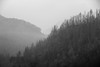 misty mountains (lufcwls) Tags: canon eos 500d rebel t1i wales uk cymru eu britain forest trees mountains hills clouds mist fog misty black white monochrome europe midwales mid ceredigion