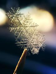 Three for one (jilllian2) Tags: toothpick nature macro iphone winter ice snowcrystal snowflake