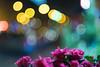 Fujinon EBC 50mm ƒ/1.4 - DSCF4198 (::Lens a Lot::) Tags: night light paris | 2016 fujinon ebc 50mm ƒ14 6 blades m42 f14 flower bokeh depth field color yellow green white vintage manual japanese prime lens extérieur profondeur de champ fleur plante brillant effet