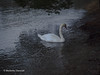 Winter Swan (TaleOfJoy) Tags: cmarkettastenroth finland helsinki kallvik meri valo winter joulukuu2017 joutsen light luontokuva maisema naturephotgraphy