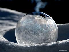 Frozen soap bubble! (Toini O Halvorsen) Tags: soap bobble soapbubble nature frost cold snow winter