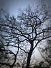 Winter tree (光輝蘇) Tags: 45 morning peaks kk