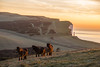 Golden Morning (Ashley Hemsley) Tags: dartmoor ponies horse travel visit beachy head east sussex england uk countryside coastline cliff lighthouse sunirse dawn flickr explore view capture canon camera 5d dslr photography artist shot walk horizon distance orange green tree wildlife light shadow focus point foreground background tourism water sea
