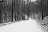 Without a Trace (BKHagar *Kim*) Tags: bkhagar road snow snowy woods notracks nocars bw black white limestonecounty al alabama monochrome landscape weather cold ice icy freezing