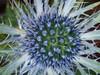 (bethany_Longbottom) Tags: hobby photography lens macro 60mm omdem10 mark11 olympus thankful arrangement natural beautiful green purple vibrant colour thistle