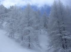 à la sortie du brouillard (bulbocode909) Tags: valais suisse champexlac brouillard brume nuages arbres forêts nature montagnes hiver neige bleu