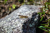 Machu Pichu (jotapedesign) Tags: machu pichu naturaleza ruinas ruins insects nature