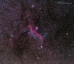Seagull_Nebula (Constantine L.) Tags: sky night stars nebula seagull astrophoto astrophotography astronomy canon 6d long exposure