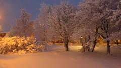 IMG_4358 (Mr Thinktank) Tags: raureif frost