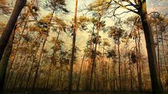 Shakespeare — 'The earth has music for those who listen.' (genevieve van doren) Tags: hertsberge flanders westvlaanderen forest bois afterthestorm apreslatempète