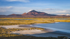 Curas en el salar (Andres Puiggros) Tags: d500 altiplano arica chile clima landscape lauca nikon paisaje puna weather salar salt flat mountain