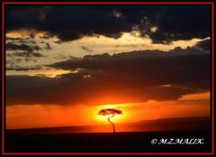 SUNSET IN MASAI MARA......SEPT 2013 (M Z Malik) Tags: nikon d800e 70200mmf28 kenya africa safari wildlife masaimara kws africansunset ngc